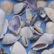 Shells Small 1lb. Bag (pack of 375)