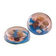 Seashell Paperweight Craft Kit (makes 12)
