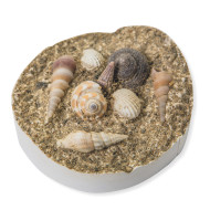 Fossil Shell Casting Kit Craft Kit (makes 24)