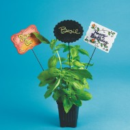 Plant Sticks (pack of 6)