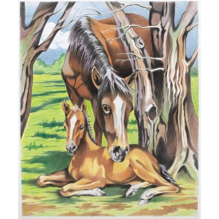 COLORING BY NUMBERS HORSE AND FOAL