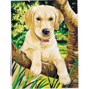 MED. PAINT BY NUMBERS LABRADOR
