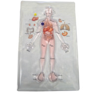 Human Anatomy Gel Pad