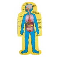 Child-Size Human Body Charts  (set of 2)