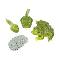 Frog Life Cycle Stages Figures (set of 4)