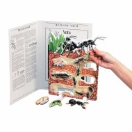 Ant Book Plus Model Ants