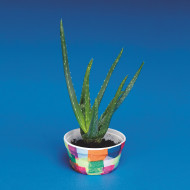 Aloe Growing Craft Kit (makes 24)