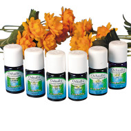 Reminiscing Essential Oil (set of 6)