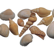 Shells! Shells! Shells! (pack of 85)