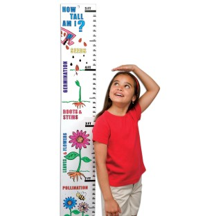 JUMBO LEARN N GROW - BUTTERFLY LIFE CYCLE KIT PK12