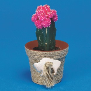 WILD WEST CACTUS PLANTING KIT PK/12