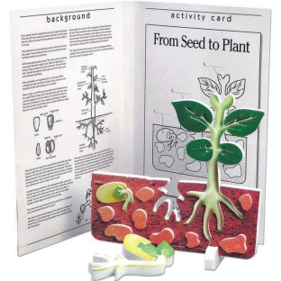 Book and Model From Seed to Plant