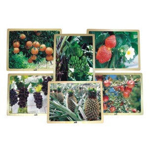Growing Up Green Healthy Eating Fruit Puzzle Set