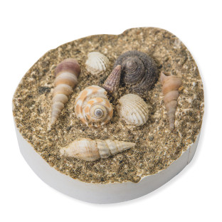 Fossil Shell Magnets Craft Kit