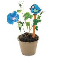 Morning Glory Gardens (Pack of 24)