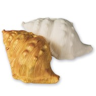 Color-Me™ Seashells (Pack of 12)