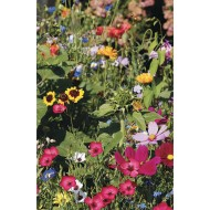 Assorted Garden Seed Mix