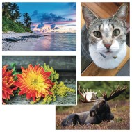 Thera-Jigsaw™ Foam Puzzles Set: Beach Sunset, Cat, Moose, and Yellow Flowers (Set of 4)