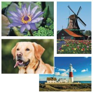 Thera-Jigsaw™ Foam Puzzles Set: Golden Retriever, Lighthouse, Purple Flower, and Windmill (Set of 4)