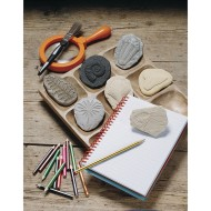 Play and Explore Fossils Kit