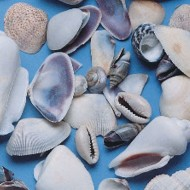 Shells Small 1lb. Bag