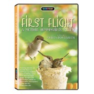 First Flight: A Mother Hummingbird's Story DVD