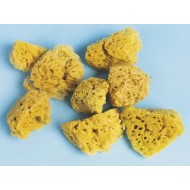 Sea Sponges (Pack of 8)