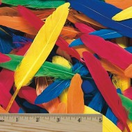 Color Splash!® Duck Quill Feather Assortment