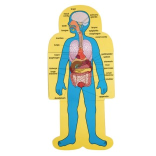 Child-Size Human Body Charts (Set of 2) - Image 1 of 1