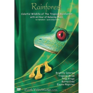 Rainforest DVD - Image 1 of 2