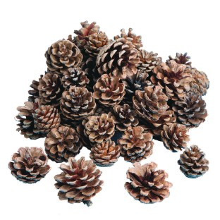 Natural Pine Cones - Image 1 of 1