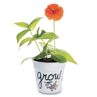 Zinnia Flower Gardens (Pack of 48) - Image 1 of 3